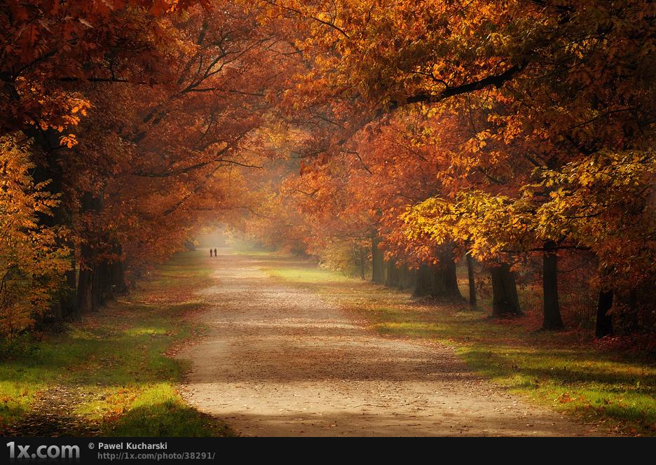 Autumn season scene