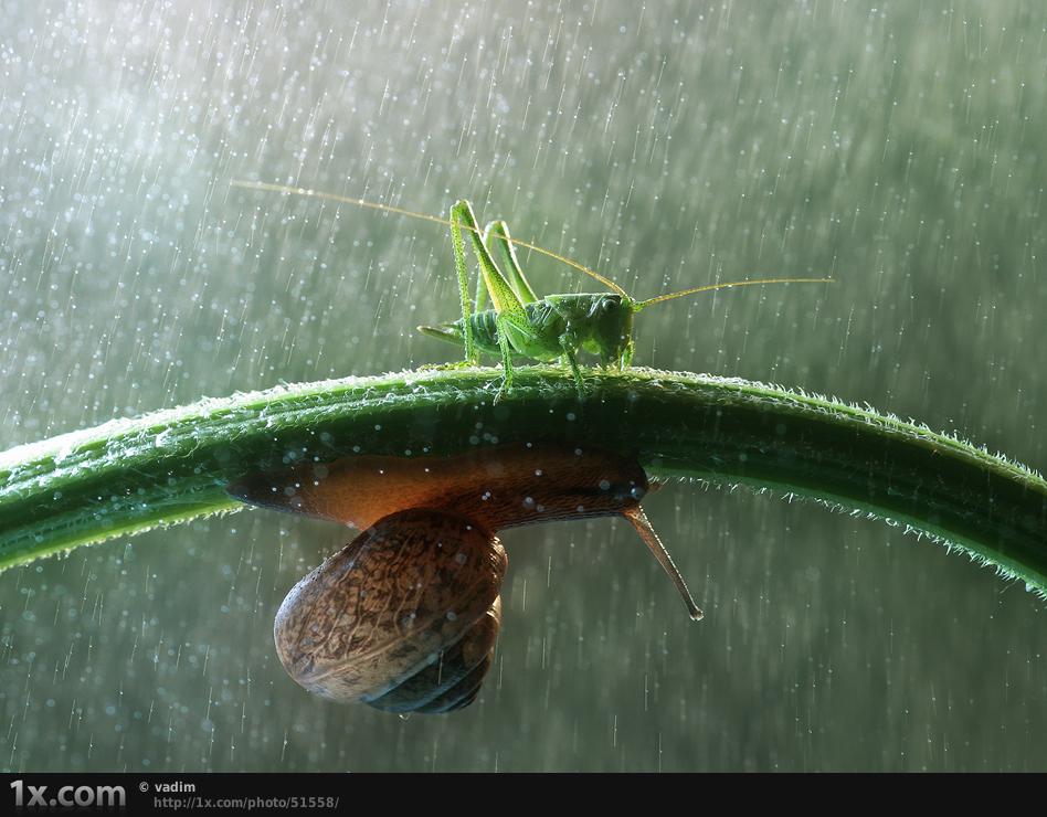 grasshopper and snail in rain