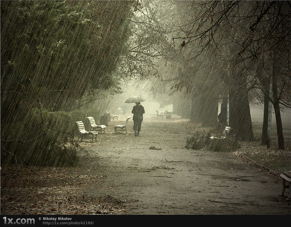 15 beautiful examples of rain photography  Shutterstoppers