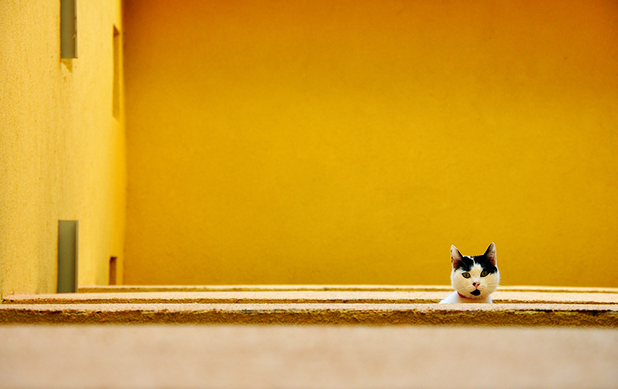 black and white cat and yellow wall