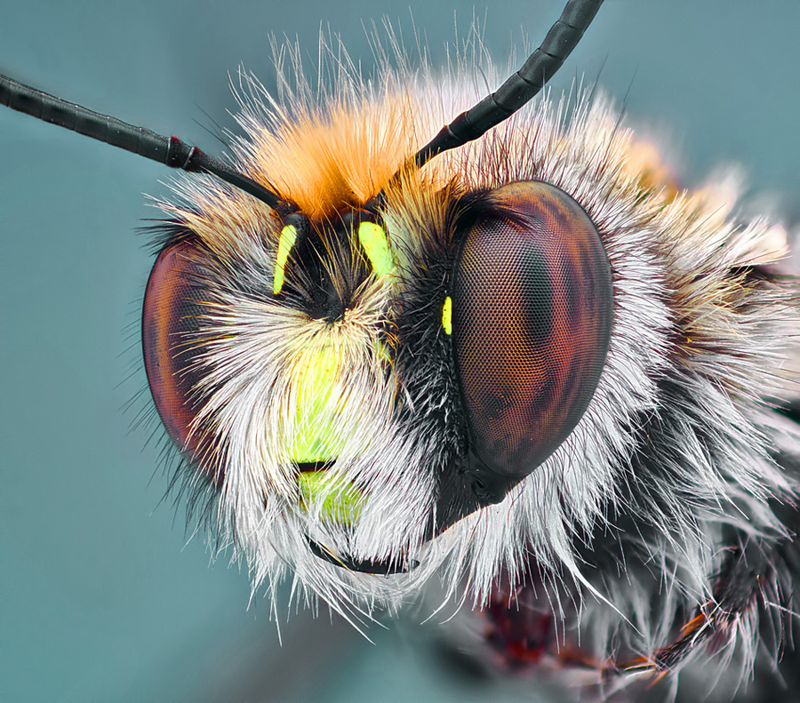 macro photograph of a bee