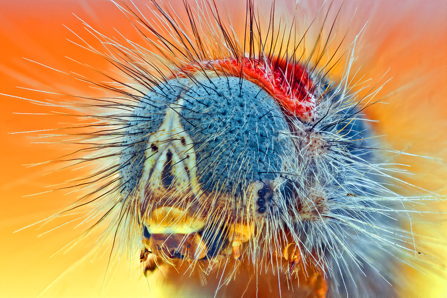 High magnification macro photograph of a caterpillar