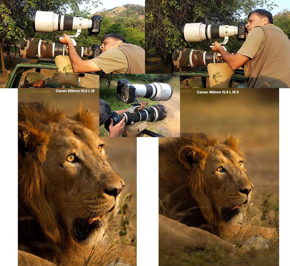 Double Decker Technique by  Wildlife photographer Sudhir Shivaram