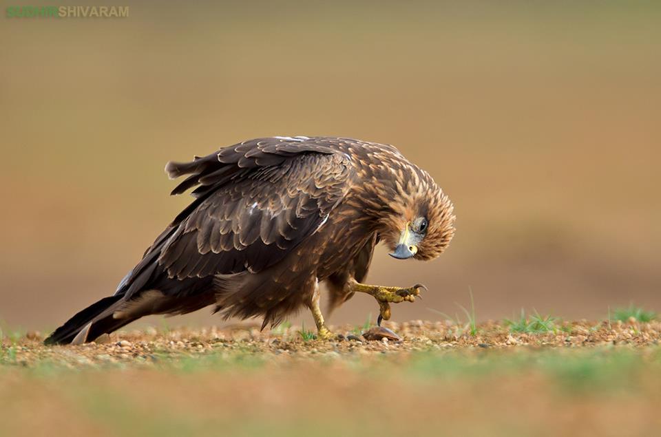 eye level shot of an eagle