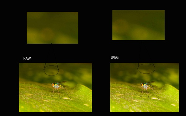 RAW and JPEG image comparison