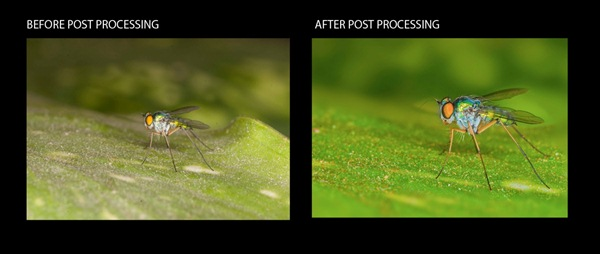 Before and after of post processing an image