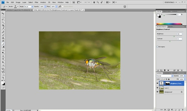 brightness contrast tool Photoshop Tutorial on Post Processing a Macro Photograph