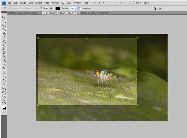 cropping the image Photoshop Tutorial on Post Processing a Macro Photograph