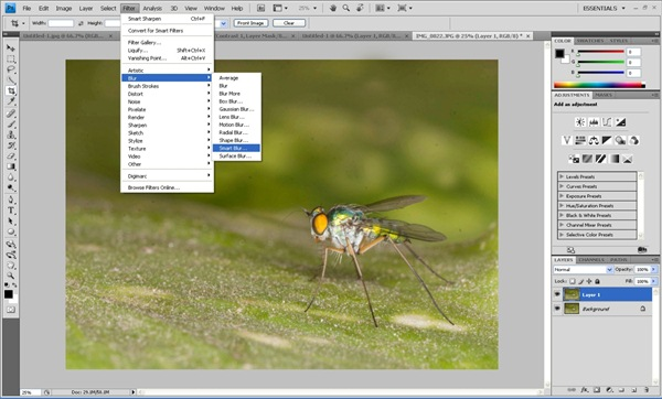smart blur Photoshop Tutorial on Post Processing a Macro Photograph