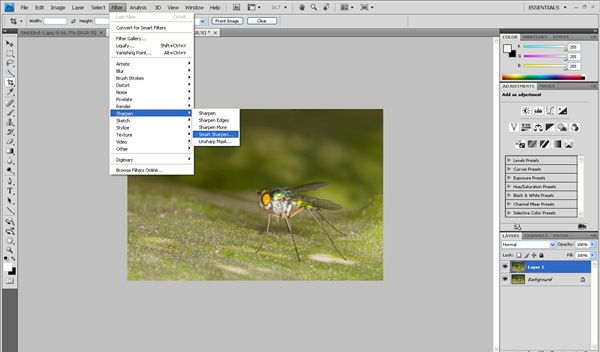 smart sharpen selection Photoshop Tutorial on Post Processing a Macro Photograph