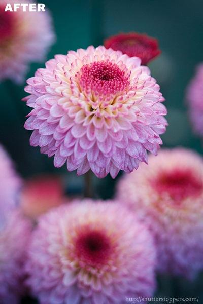 violet flower after preset