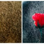 Download Free Lightroom 4 Photo Stylizer Preset