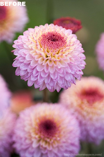 Violet flower before preset