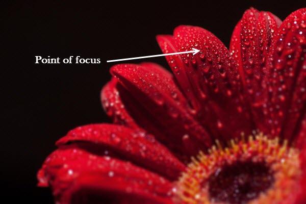 focus stack image