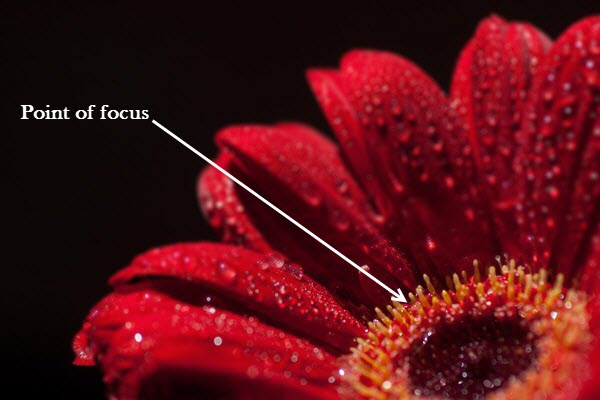 Focus stack image 2 4 Things You Should Do Before Focus Stacking