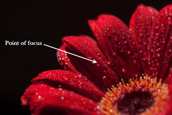 Focus stack image 3 4 Things You Should Do Before Focus Stacking
