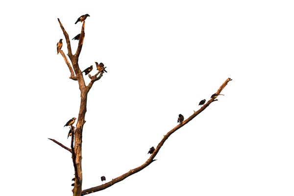 groups of birds on a tree