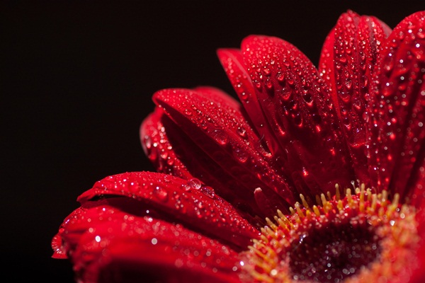 focus stacked 4 Things You Should Do Before Focus Stacking