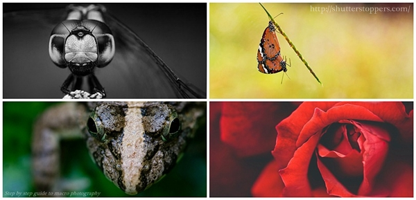 macro photography step by step guide