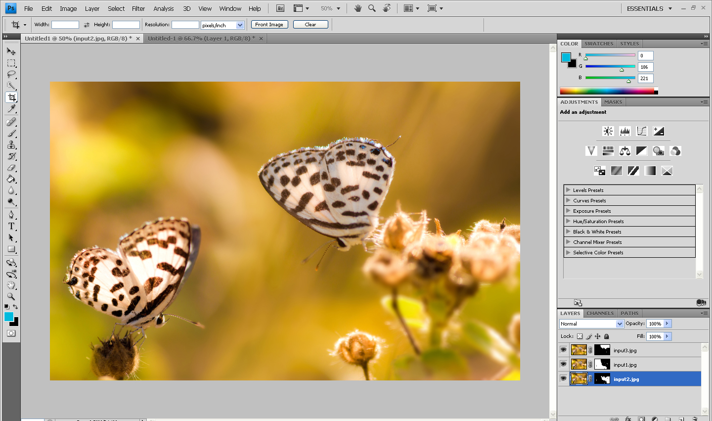 cropping the image in photoshop