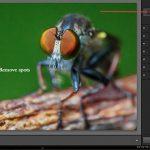 Lightroom 5 beta tutorial: Exploring New Features To Enhance Photographs