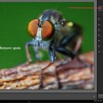 Lightroom 5 beta tutorial: Exploring New Features To Enhance Photographs
