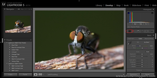 image in lightroom 5 beta
