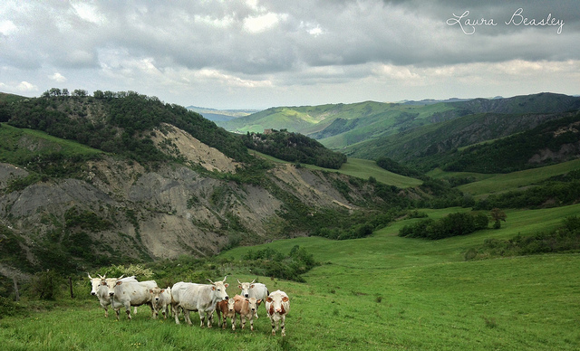 landscape photograph with cattle in the foreground in Italy