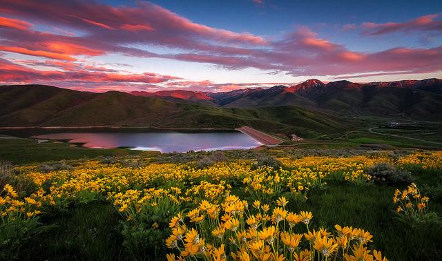East Canyon Wildflower Sunset - Utah Landscape