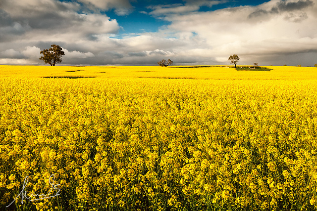 Canoloa Fields - Wollogorang NSW -- landscape photography tips