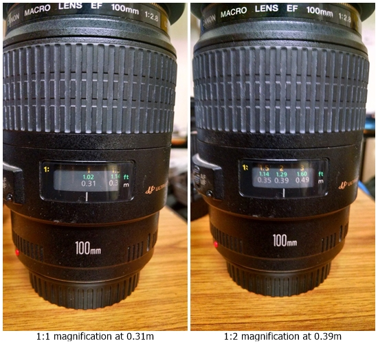 comparison of magnification by canon 100mm macro lens