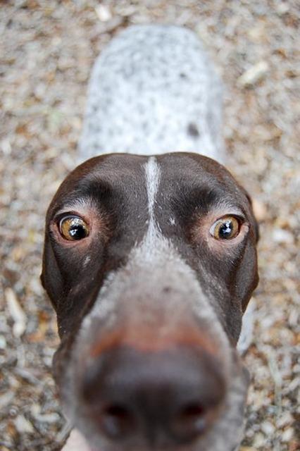 Animal Dog Depth Of Field Canine Puppy Pet Cute
